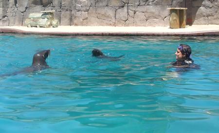 Baño con osos marinos
