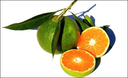 Mandarinas okitsu